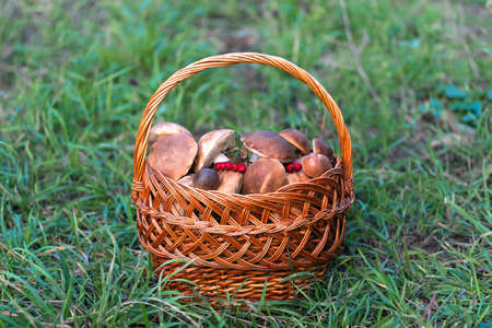 Mushrooms collected in a large basket, food background. Mushrooms are ingredients for cooking vegetarian dishes.