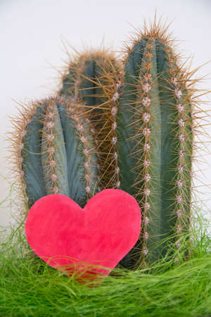 love hurts: beautiful cactus with a red heart