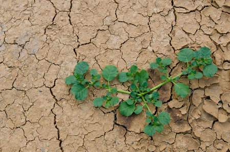 dryness: The last  plants survival in the dryness land.