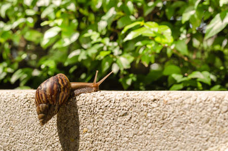 despite: Snail try to Climbing the wall. Despite a difficult thing ,But it is trying to finish.Could be a metaphor for everyone. If you have tried it you will meet with success.