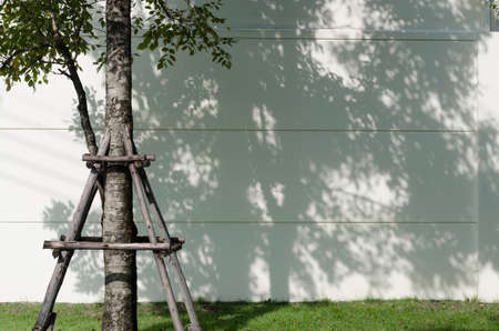 focus on background: Light and shadows of trees projected onto the wall.