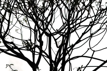 Twigs and branches in high contrast on white background. Stock Photo