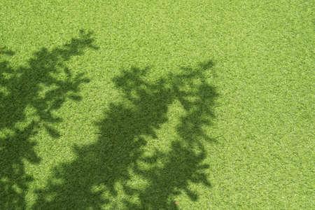 tree shadow: Tree shadow on green grass in the garden.