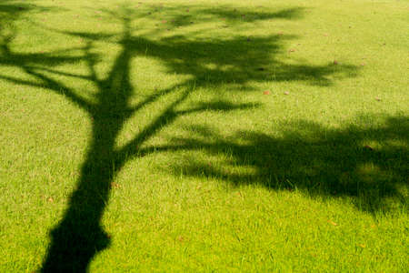 connectedness: Tree shadow on green grass in summer.