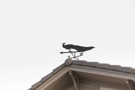 Weathervane with peacock  above an arrow  isolated on white background.