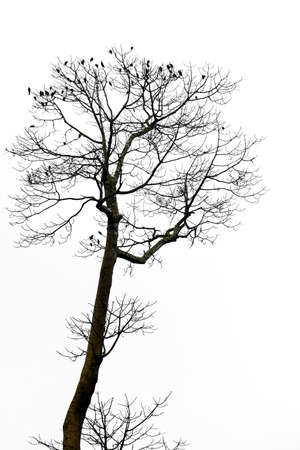 Group of birds on tree branches isolated on the white background.