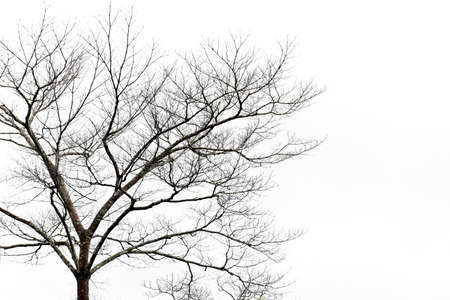 Tree branches isolated on the white background, Landscape