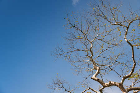 Beautiful tree branches in springtime against blue sky background, color filter effect background.
