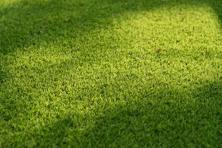 Licht en schaduw op groen gras. Stockfoto