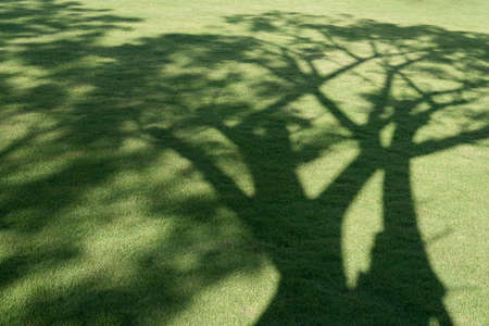 Tree shadow on green grass in the public park.