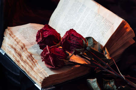 Still life with old book and dry roses