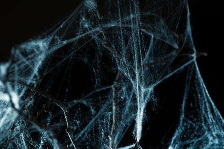 lightbeam: Abstract Spiderweb on branch on black background