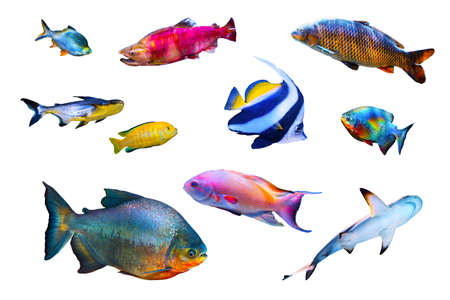 Fish collection isolated on white