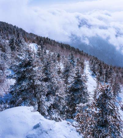 Russian snow trees Stock Photo