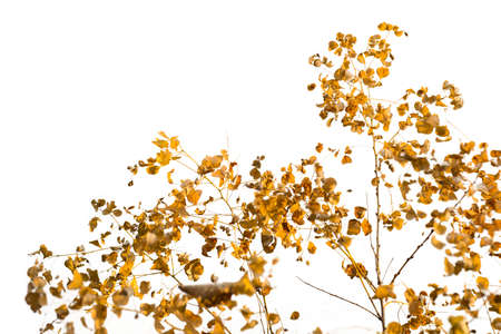 Branch of autumn leaves isolated on white Stok Fotoğraf