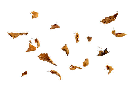 Dry autumn falling leaves on white background