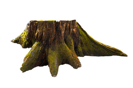 Old tree stump with moss isolated on white 스톡 콘텐츠