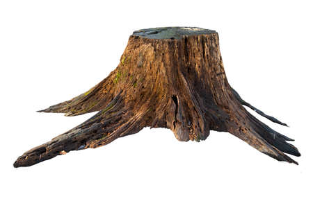 Old tree stump with moss isolated on white Archivio Fotografico
