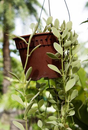 flowerpot: Flowerpot Stock Photo