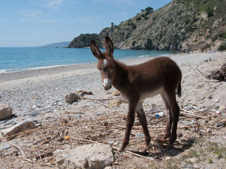 Young donkey on the beach photo