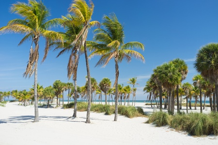 florida landscape: Beautiful Crandon Park Beach in Miami s Key Biscayne Stock Photo