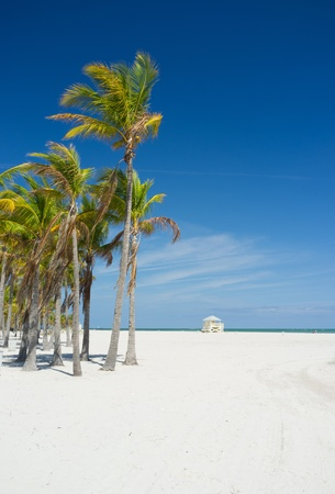 Beautiful Crandon Park Beach in Miami s Key Biscayne Stock Photo - 13190610