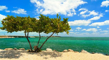 key west: Shoreline of the Florida Keys with pretty blue sky and clouds