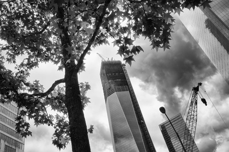 eleven: Dramatic black and white view of the new Freedom Tower under construction in downtown Manhattan, New York with a tree in the foregound