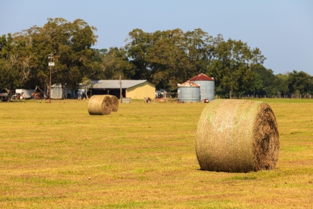 Bales of hay in a farm  photo