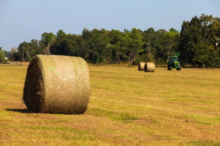 Bales of hay in a farm. photo