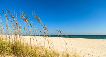 sea grass: Beautiful Perdido Beach in Pensacola, Florida.