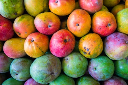 mango fruit: Close up view of ripe Florida mangos  Stock Photo