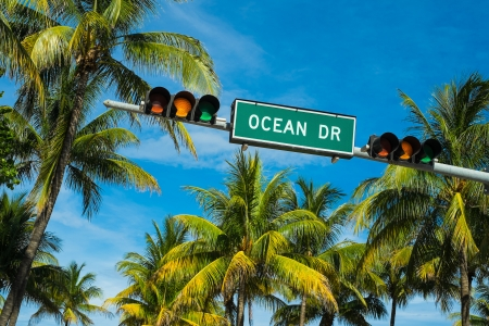 Coconut palm trees along Ocean Drive in Miami Beach