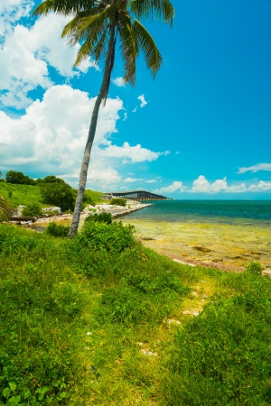 Beautiful Florida Keys along the shoreline with palm tree and bay view. photo