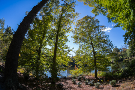 Scenic fish eye view of a forest with tall trees and lush landscape with fall colors. photo