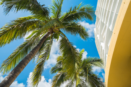 Downtown Miami along Biscayne Bay with condos and palm trees. Stock Photo - 24300042