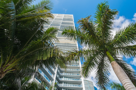 high rise: Downtown Miami along Biscayne Bay with condos and palm trees  Stock Photo