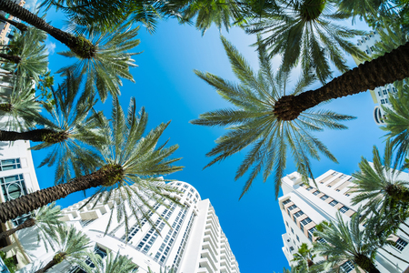 Beautiful Miami Beach fish eye cityscape with palm trees and art deco architecture. Stock Photo