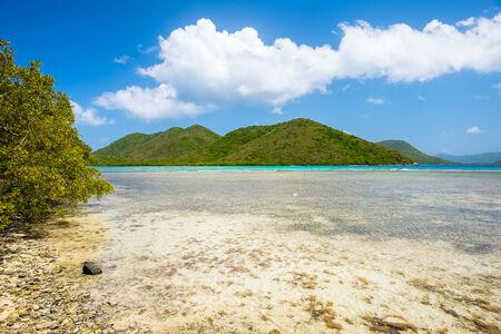 leinster: Beautiful pristine Carribean beach in Saint John in the United States Virgin Islands.
