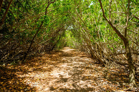 leinster: Beautiful Leinster Bay Trail in Saint John in the United States Virgin Islands.