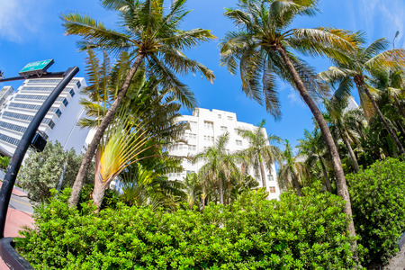 Beautiful Miami Beach fish eye cityscape with palm trees and art deco architecture. photo