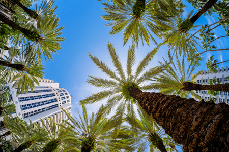 hotel building: Beautiful Miami Beach fish eye cityscape with palm trees and art deco architecture. Stock Photo