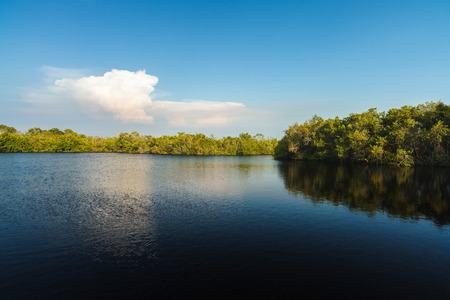everglades: Natural beauty of the Florida Everglades.