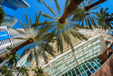 fish eye: Fish eye view of the Brickell area in downtown Miami. Stock Photo