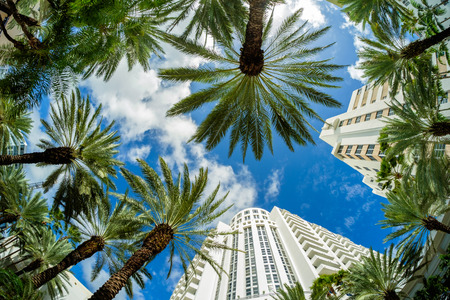 fish eye: Beautiful Miami Beach fish eye cityscape with art deco architecture and palm trees.
