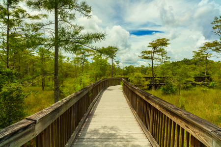 everglades: Beautiful landscape of a nature trail boardwalk in the Grand Cypress Preserve in the Florida Everglades.