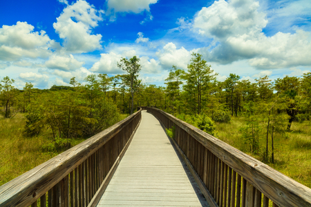 boardwalk trail: Beautiful landscape of a nature trail boardwalk in the Grand Cypress Preserve in the Florida Everglades.
