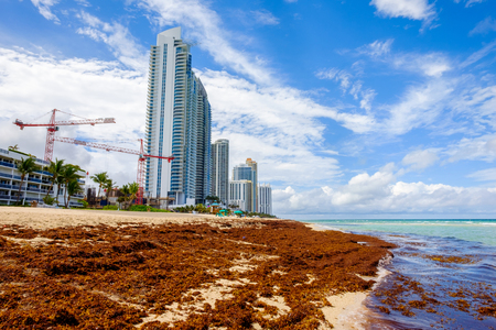 isles: Seaweed covered shoreline on Sunny Isles Beach in North Miami. Stock Photo