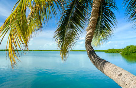 the bay: Beautiful Florida Keys along the shoreline coconut palm tree and gulf view.