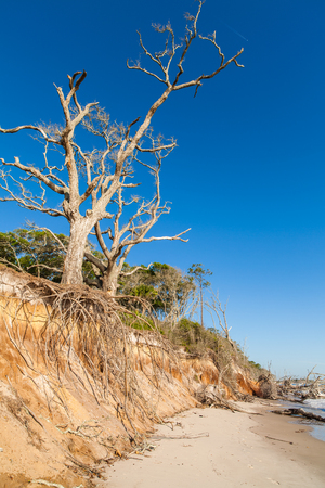 erosion: Natural erosion along the shoreline on Big Talbot Island in Jacksonville.